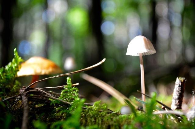 Delicate mushroom