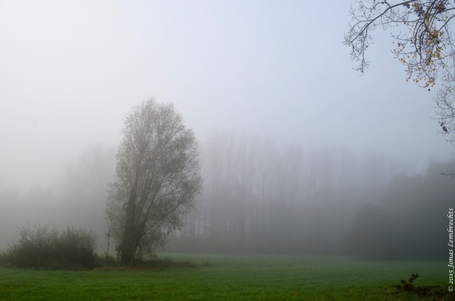 Autumn landscape in the mist