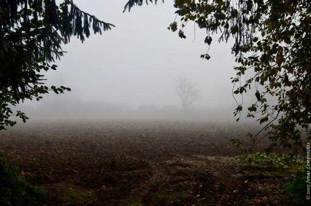 View on misty field
