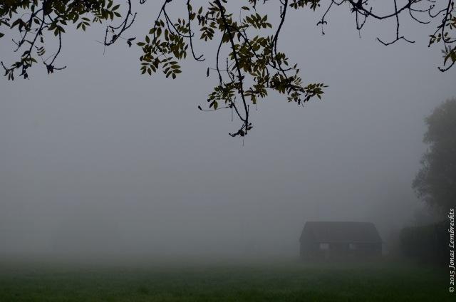 Misty agricultural landscape