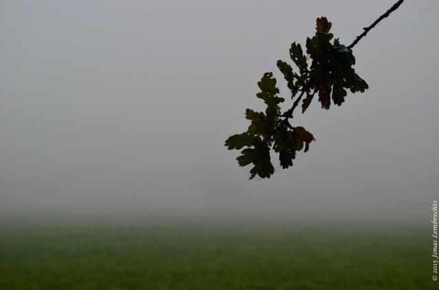 Branch of oak tree in the mist