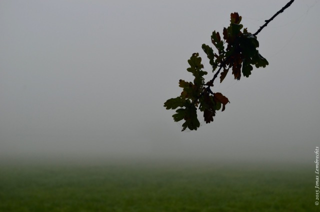 Branch of oak tree in the mist