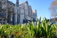 Cathedral with a glimpse of spring