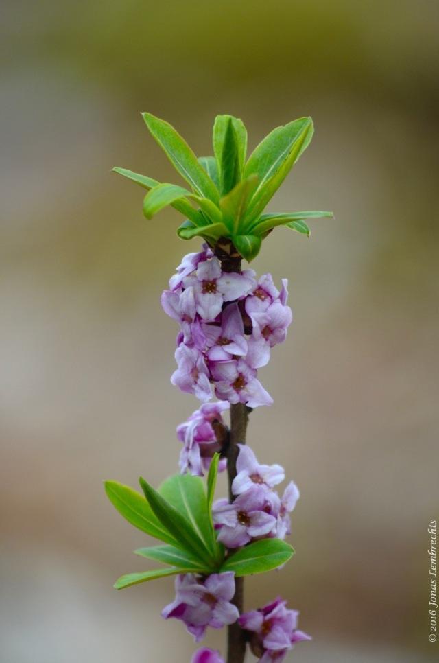 Spring flowers - 1
