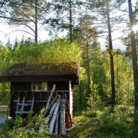 The little hut in the forest