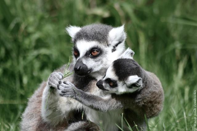 Baby animals - 2