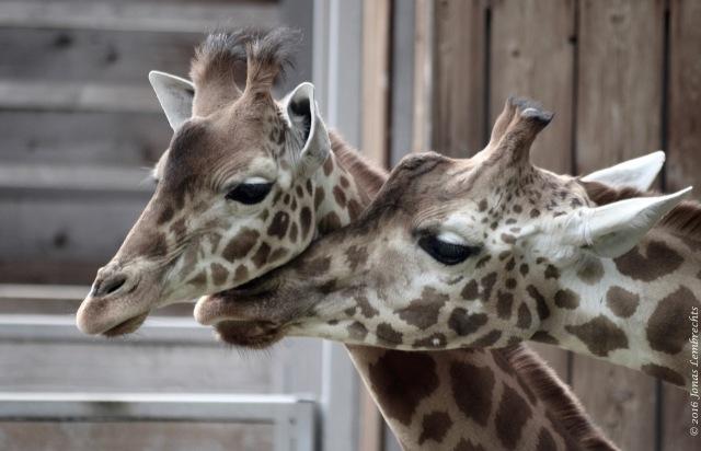 Baby animals - 3