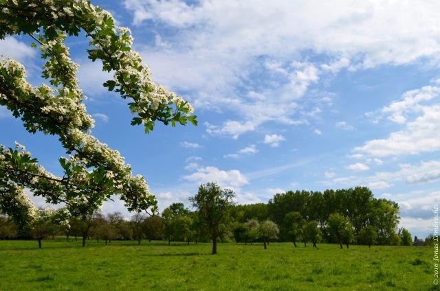 Spring blossoms - 1