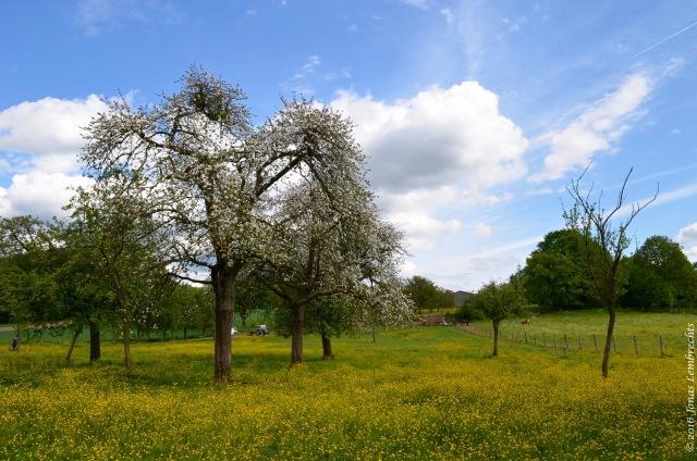Spring blossoms - 2