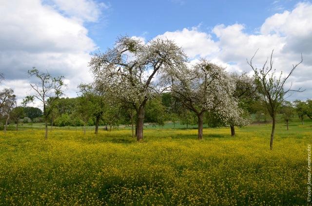 Spring blossoms - 3
