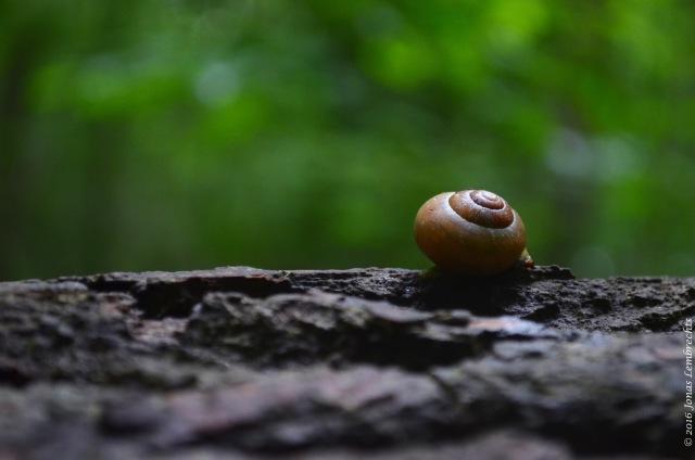 Snails - 1