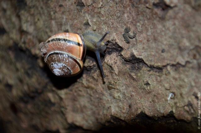 Snails - 2