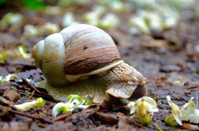 Snails - 3
