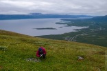 Counting seedlings on mount Nuolja