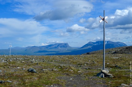 Although the alpine zone has been harder for invasives to access than most places, human structures like trails are often an easy gateway for the invaders to get up there. Picture from Abisko, Swedish Lapland.