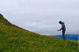 Counting seedlings on mount Nuolja