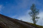 My favourite birch-on-the-rocks