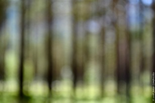 Lowland Norwegian pine forest