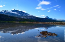 Reflections and seaweed in a fjord