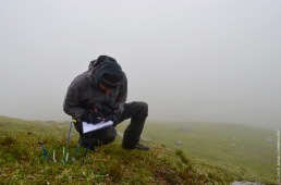 Counting seedlings in the mist