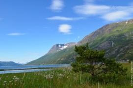 Idyllic Norwegian fjord - Skjomen