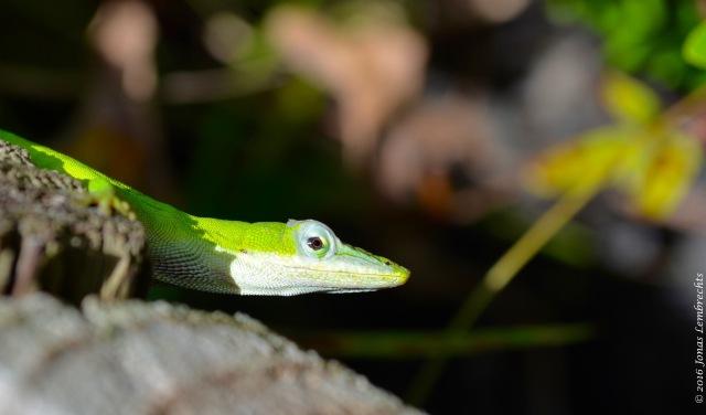 Florida Zoo - 4