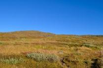 abisko-autumn-101