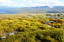 This green is greener than the greenest green: moss on top of mount Nuolja
