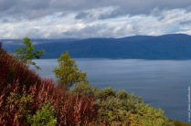The colours of the north: red fireweed and yellow mountain birches, with lake Torneträsk on the background