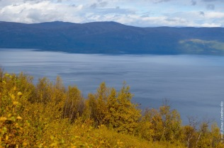 The prettiest yellow and blue: autumn in Abisko