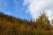 abisko-autumn-37