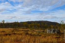 A lowland marsh in Abisko in autumn
