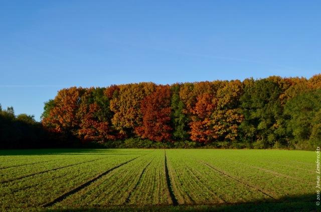 falling-leaves-2