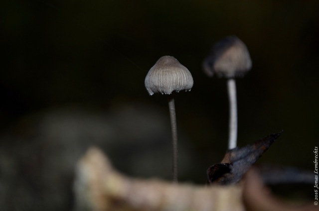 mushrooms-5