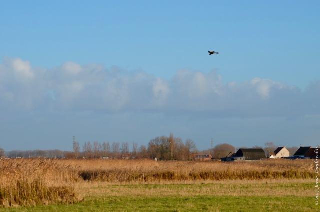 uitkerkse-polder-11