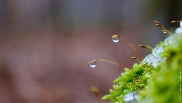 micro-moisture-1