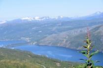 Epilobium angustifolium overlooking Rombak-fjord, Narvik, Norway