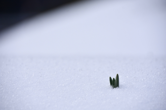 Winter - 1 (1)