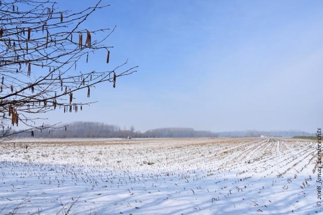 Winter - 6