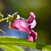 Matching the plant with the environment: what makes invasive plant species so successful?