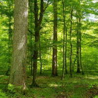 PhD Position on Forest Microclimate and Biodiversity Under Anthropogenic Climate Change