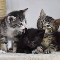 KittenR
