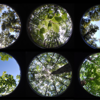 Taking the temperature of forest microclimate research