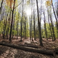 The first map of the air-conditioning effect of European forests